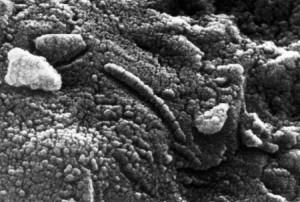 Esta imagem microscópica do meteorito ALH 84001 não contém sinais de vida marciana, segundo Schopf.