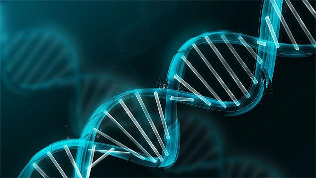 A história da evolução está escrita no DNA. É só saber ler.