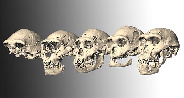 Fósseis do gênero Homo de 1,8 milhão de anos encontrados na Ásia: nossos parentes evolutivos.