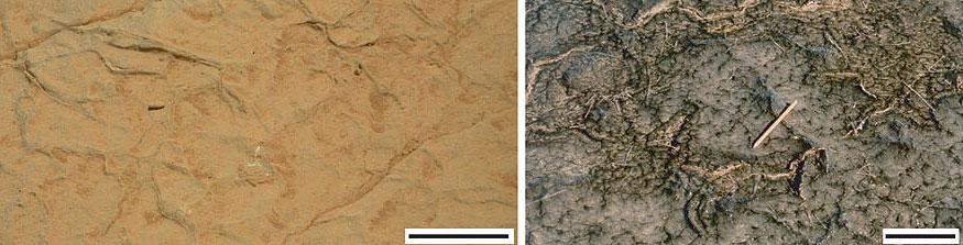 Mesmos traços no solo em Marte e na Terra. O nosso é biológico. E o de lá? (Crédito: Nora Noffke)