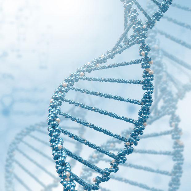 Um dos aspectos elegantes do DNA é que ele não tem comprimento definido. Quanto maior, mais informação genética cabe nele.